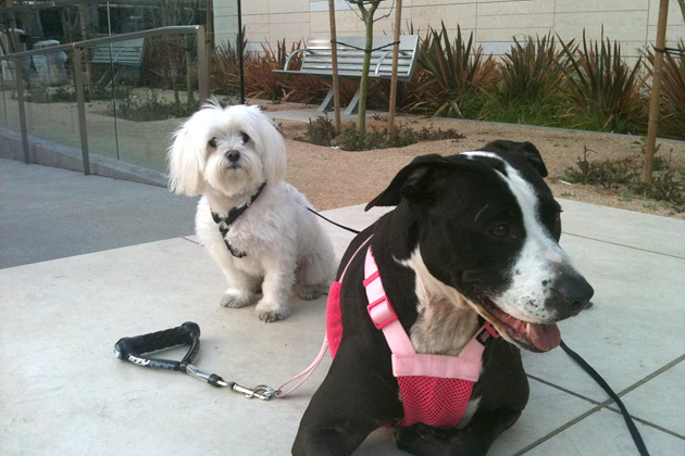 Nikko and Lola, Cute Pet of the Week Candidates