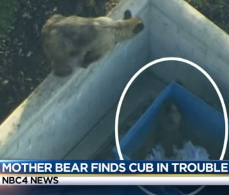 Wildlife officials in California came to the rescue of a baby bear stuck in a dumpster.