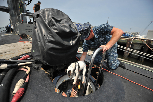 Lars J274, a Jack Russell terrier with is the perfect size for sniffing out bombs in submarines