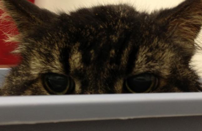 Cat hides in empty box
