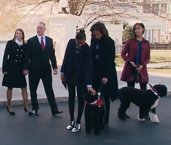 First dogs Sunny and Bo were part of the group receiving the White House Christmas tree on Friday.