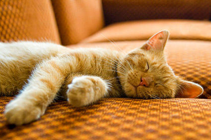 Sleeping orange tabby cat, lying on side