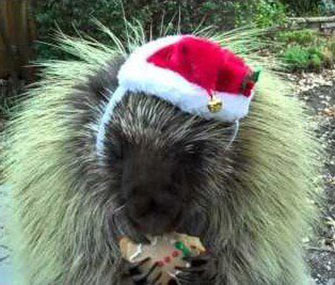 Teddy Bear, here eating a Christmas cookie, can be heard in 'The Hobbit.'