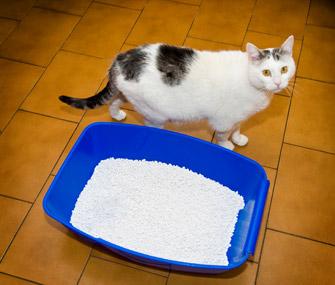 Cat outside litterbox
