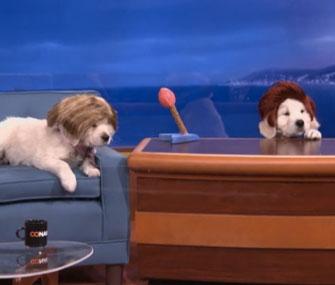 Puppy Conan