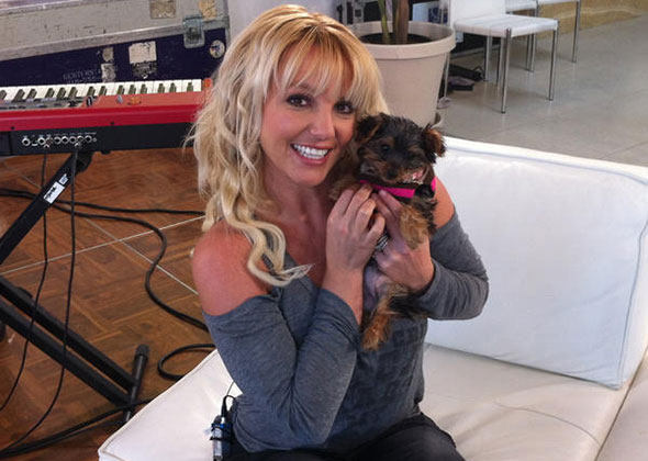 Britney Spears with puppy Hannah Spears