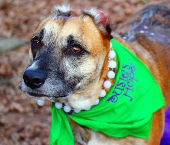 Susie, American Humane Association's Hero Dog