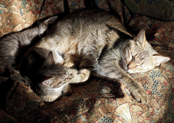 cats sleeping in sunbeam