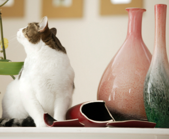 Cat knocked over a fragile vase