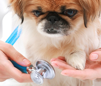 Little Dog Being Examined By Vet
