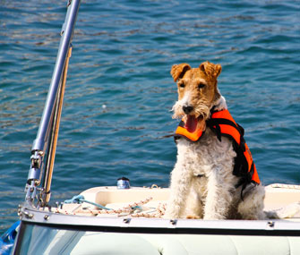 Terrier on a boat
