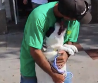 Weeks after she was lost, Daisy was thrilled to be reunited with her owner.