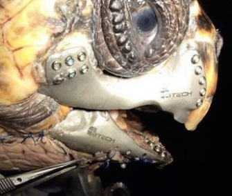 An injured sea turtle rescued in Turkey will return to the ocean with a 3D-printed jaw.
