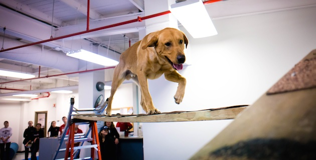 Working Dog Center dog on ladder