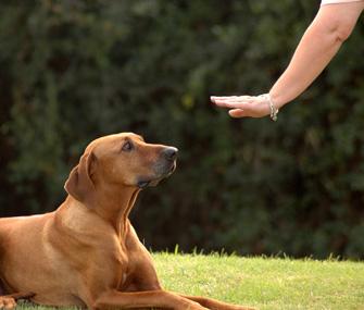 Hand signals for deaf dog