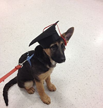 Puppy poses for graduation photo