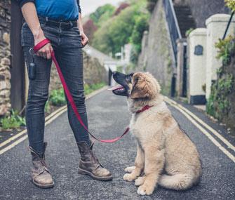 Puppy on leash