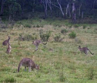 Kangaroo Street View