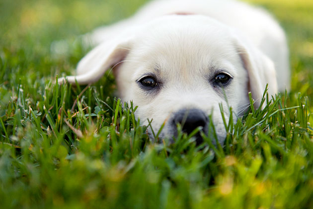How to Select a Puppy Who's Right for You