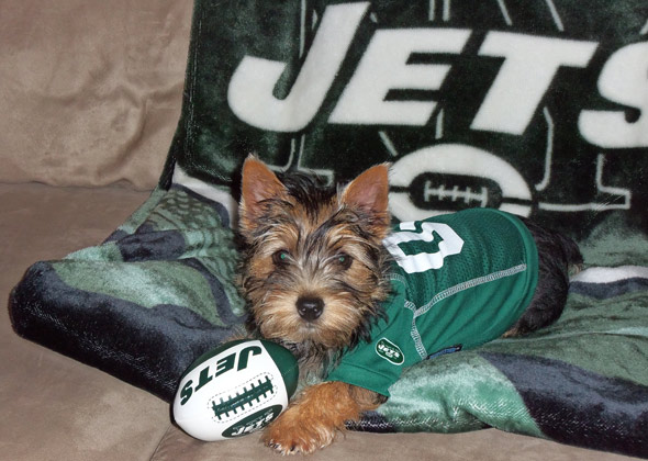 Rick Stoy's dog loves the Jets