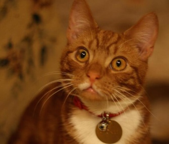 Jock VI was rescued from a shelter to become the latest marmalade cat to reside at Winston Churchill's former estate.