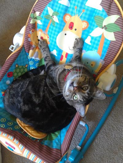 cute cat in baby seat