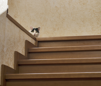 Cat hiding behind stairs