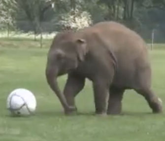 Donna the elephant plays soccer