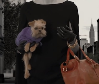 Ten shelter dogs are featured in a short film ad for Ralph Lauren called The Dog Walk.