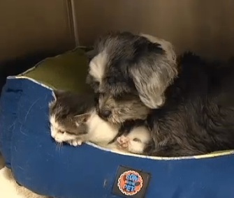 A dog in South Carolina has adopted this kitten as her own.