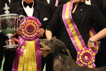 2011 Best in Show Winner