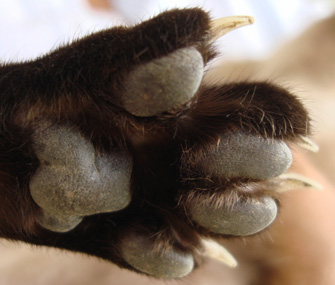 Why Do I Need To Trim My Cat S Claws