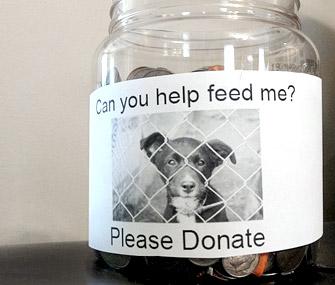 Feed a pet donation jar