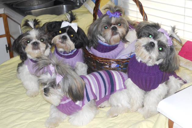 The Purple Sweater Gang