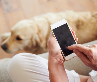 Woman holding smartphone in front of dog