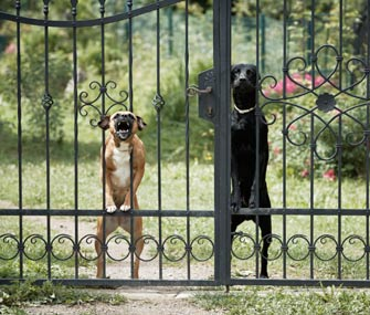 Dogs At Gate Barking