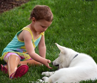 Sapphyre, a 3-year-old whose feet were amputated, meets Lt. Dan, a puppy born without a paw.