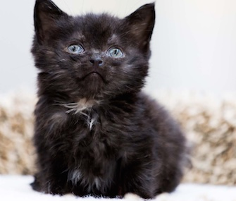 A kitten who was found by children in Wisconsin was named Miracle.