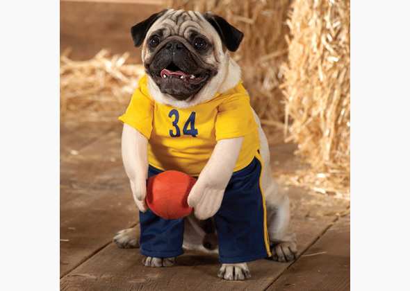 Top Paw basketball player costume