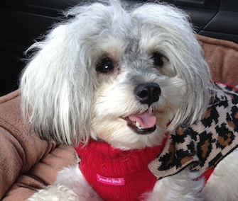 Tessa, who was rescued by the Bill Foundation in Los Angeles, spent the holiday weekend with her new adoptive family.