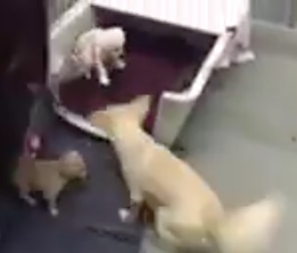 Mom Cora was thrilled to be reunited with her puppies at a California shelter.