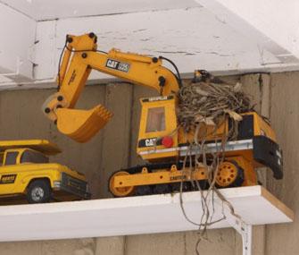 Bird in nest in toy truck