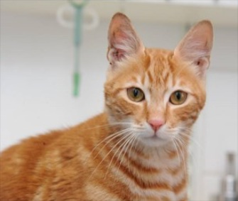 Sinbad is in quarantine in England after surviving for 17 days in a sealed container on a ship from Egypt.