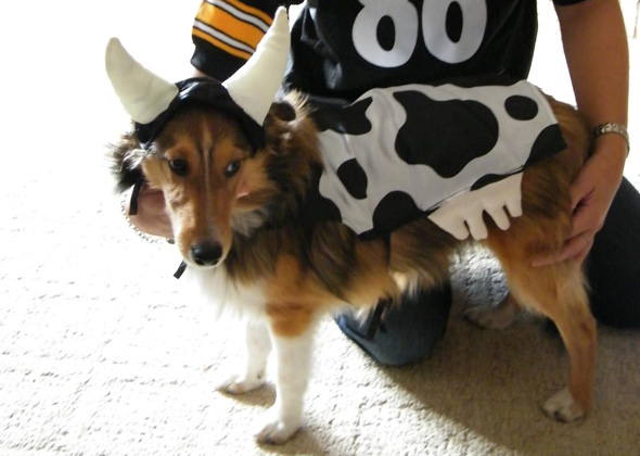 Dog as Cow
