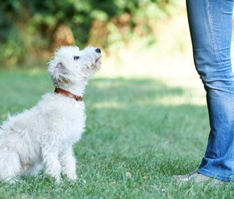Training dog in a field