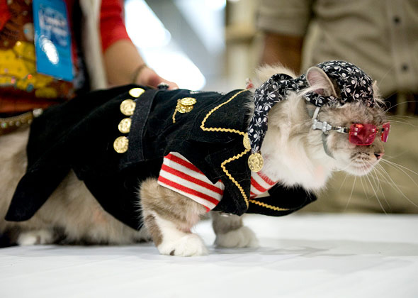 Cat Rockstar at Meet the Breeds Cat Fashion Show