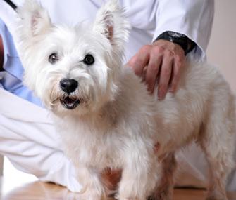 Senior dog at vet