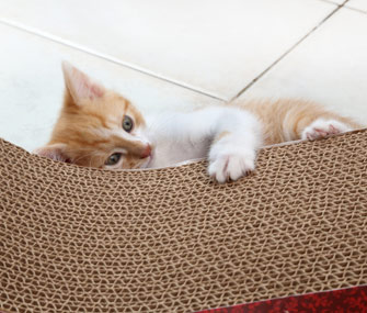 Kitten scratching horizontal scratching post