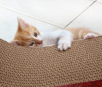 Cats Vertical Scratching