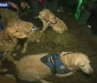 Comfort dogs visit children in Newtown, Conn.